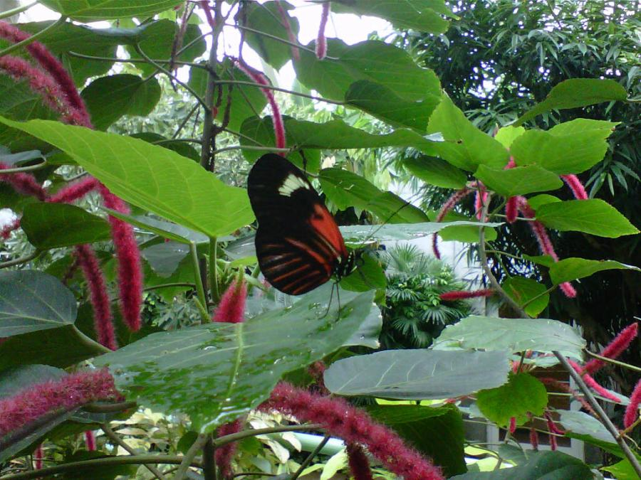 Butterfly House - Natural History Museum 03-31-12